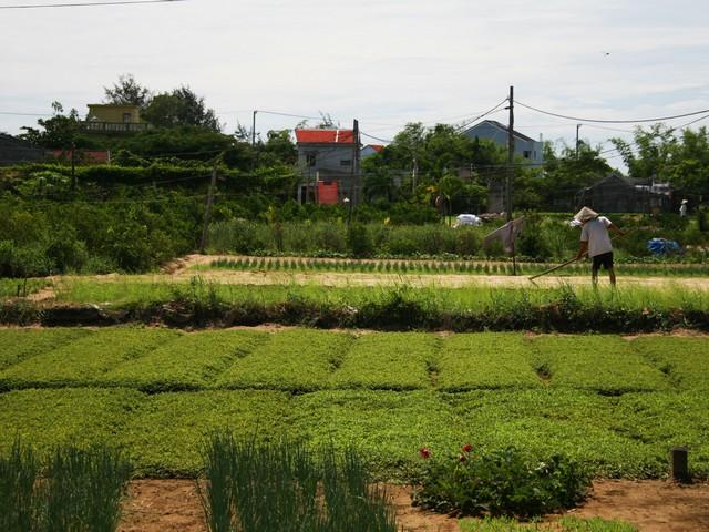 Hoi An Farming Experience