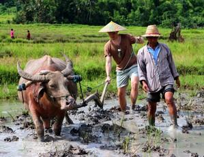 LUANG PRABANG | Rice Planting Experience